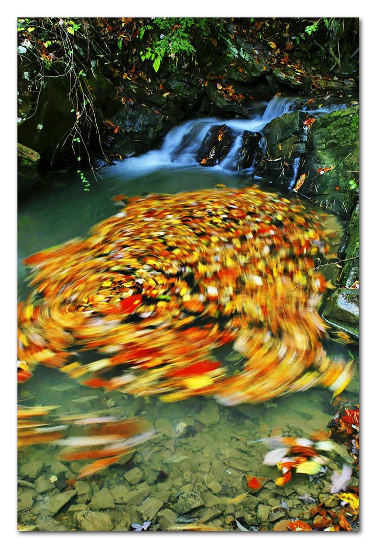 2002-11-10, IMG_2935w, Smokie Mtns Tenn_DxO