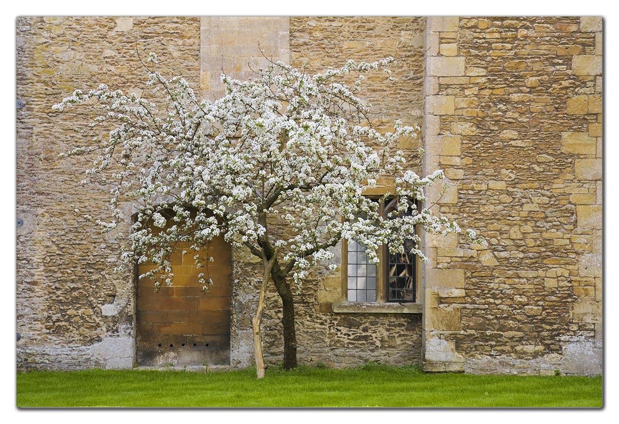 2007-04-24_0131w, Lacock Abbey