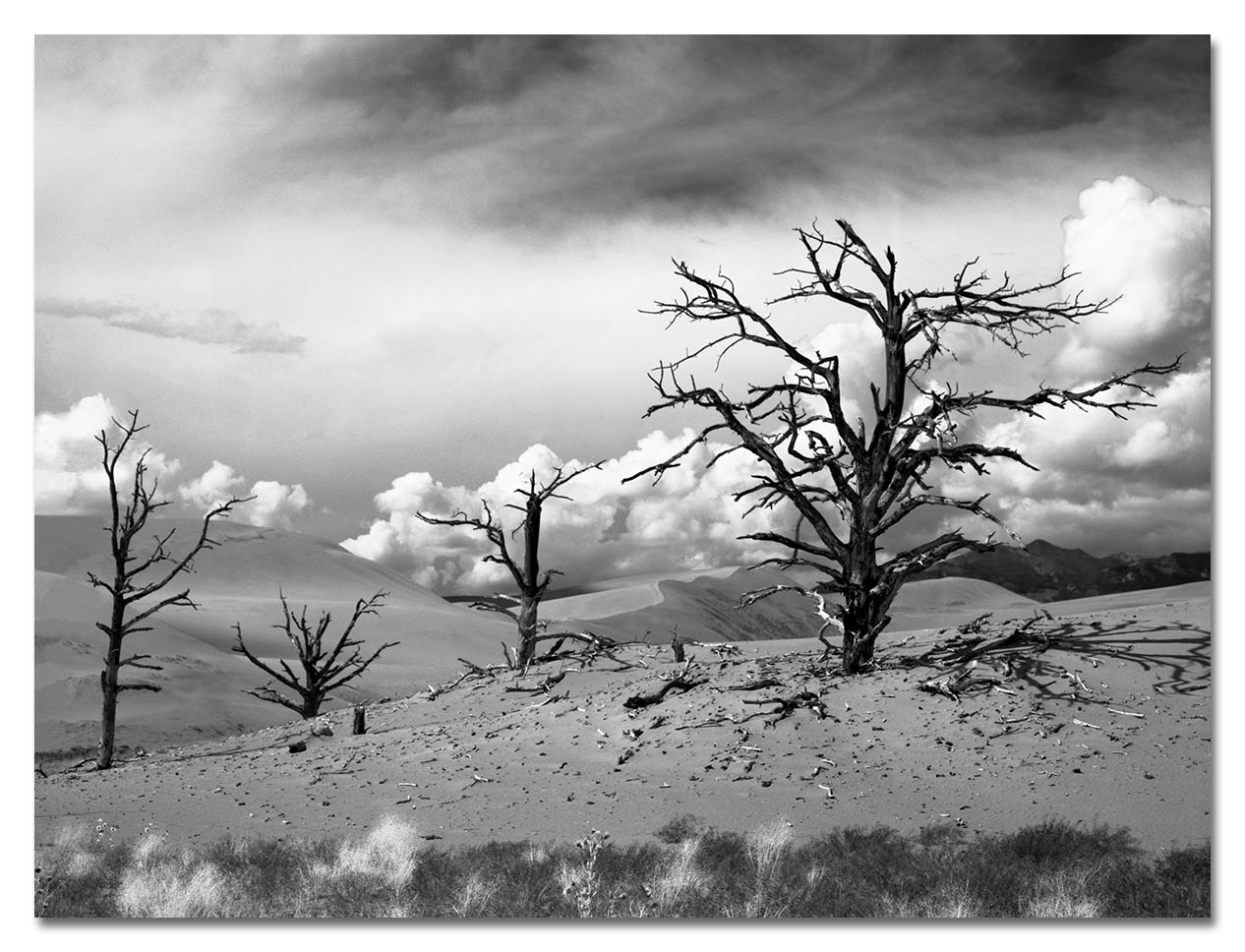 94-9-3 Sanddunes, ghost trees, 1600scan_web